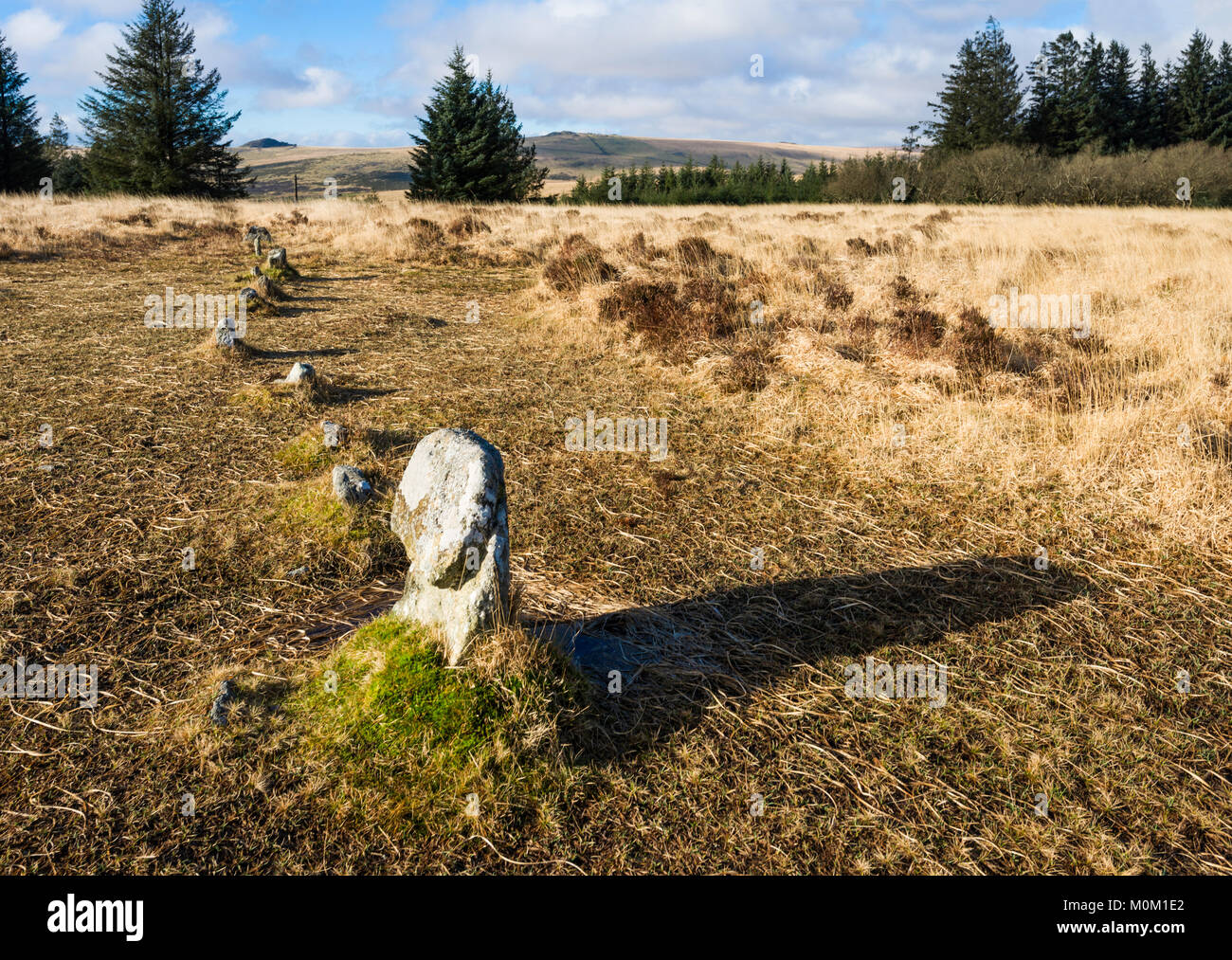 Ancient stone row, Site Number 11A, on Lakehead Hill prehistoric complex near Bellever, Dartmoor, Devon, UK. - Stock Image