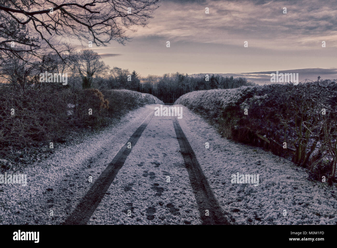 After a heavy snowfall a vehicle leaves tracks in the snow, down a country lane in Howden Le Wear, County Durham - Stock Image