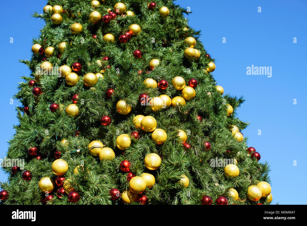 Christmas Tree Outside.Gold And Red Baubles On A Large Christmas Tree Outside On A