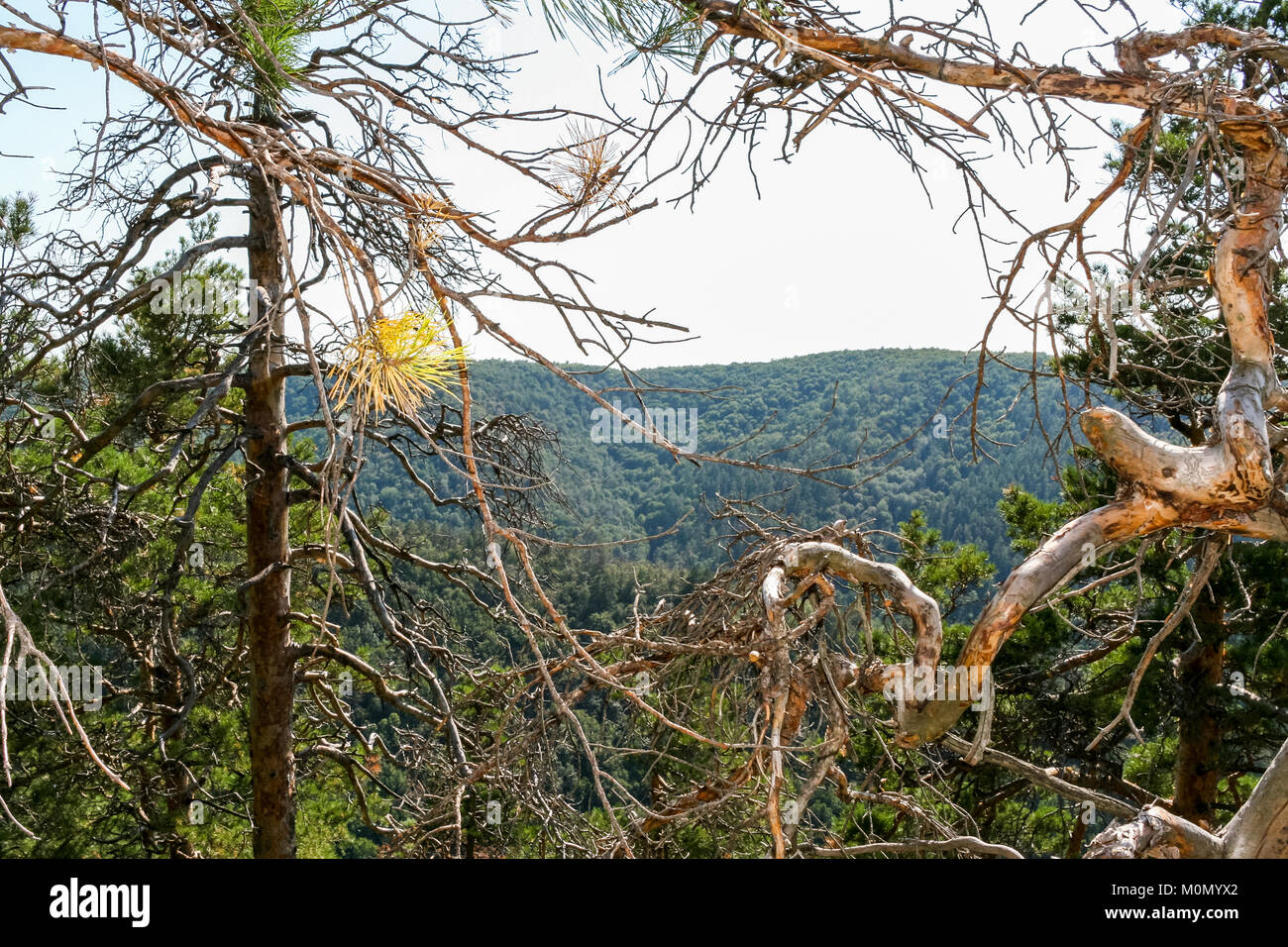 Frame of dry whimsical intertwining of the branches of the trees. Top view through it to mountains. - Stock Image