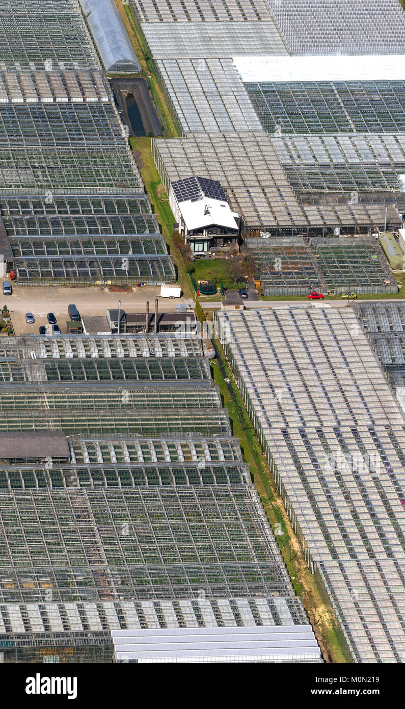 Greenhouses Aldenhoff GbR in the east of Schermbeck, Schermbeck, Ruhr area, North Rhine-Westphalia, Germany, Europe, - Stock Image