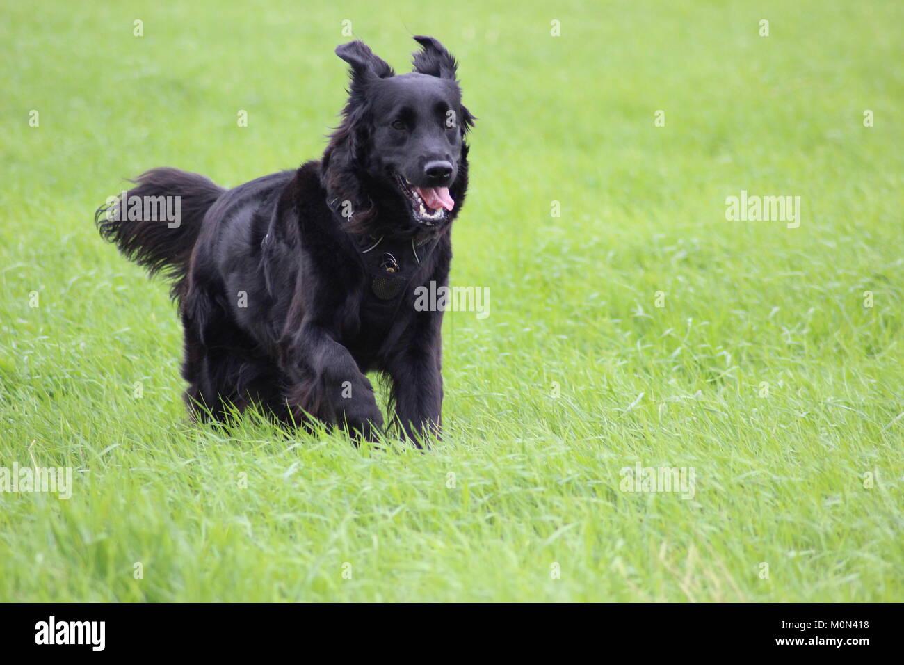 Black Hairy Tongue Stock Photos & Black Hairy Tongue Stock ...