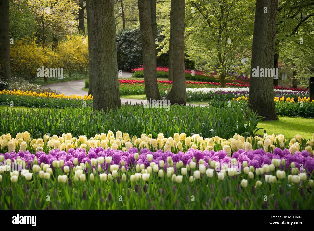 Tulpenbeete im Keukenhof Niederlande - Keukenhof Netherlands - Stock Image