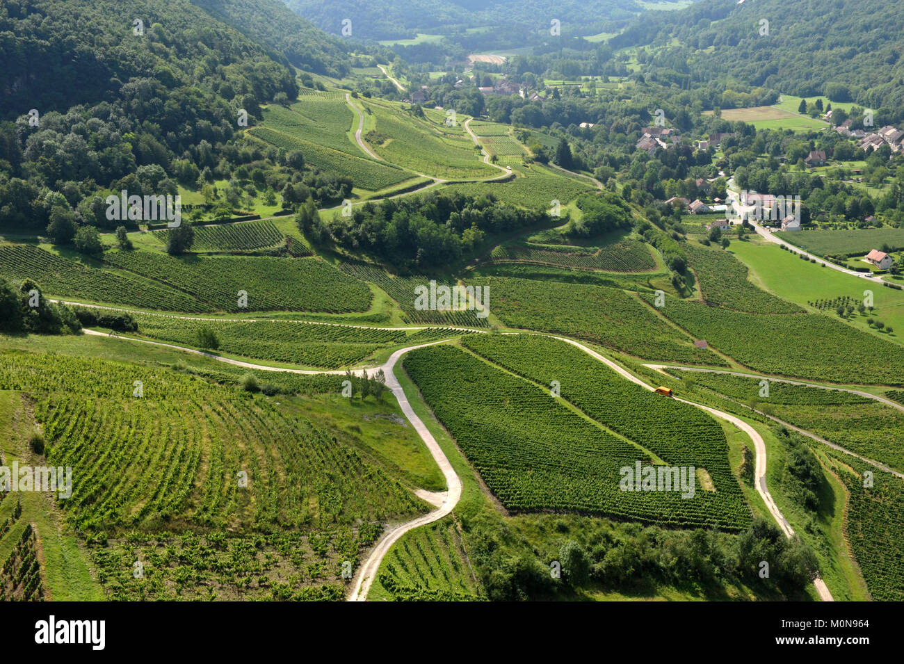 Vineyard in Chateau-Chalon, well-known for the production of Chateau-chalon yellow wine (with a guarantee of origin - Stock Image