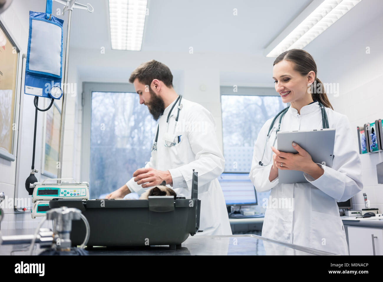Vet doctors in their clinic with a cat patient - Stock Image