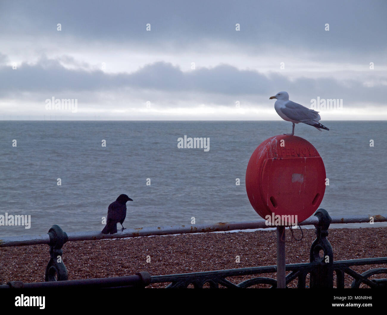 A seagull and a crow look out to sea together in Brighton - Stock Image