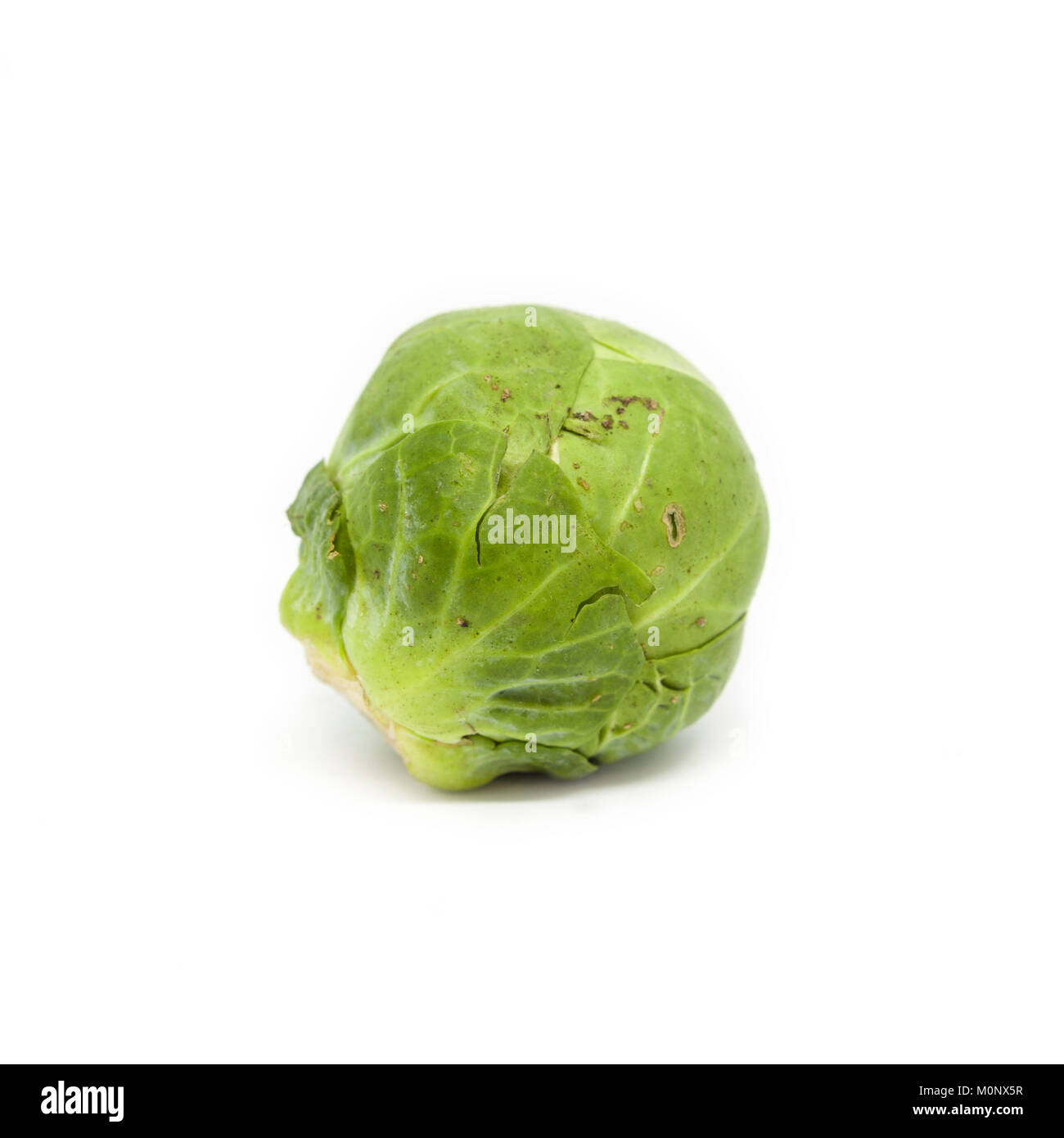 A Brussels Sprout isolated on a white background. - Stock Image