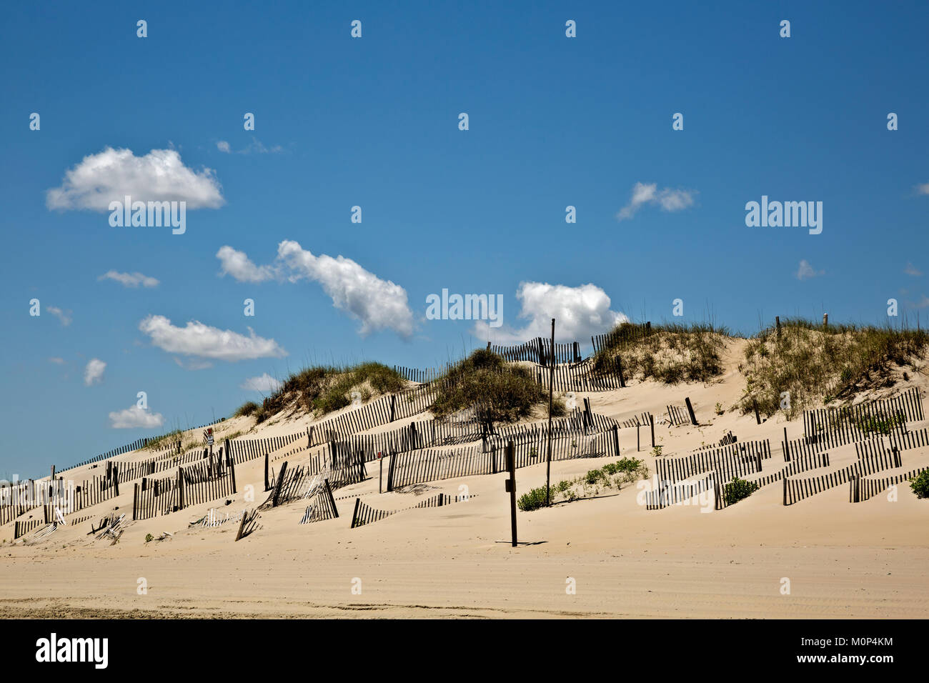 NC01409-00...NORTH CAROLINA - Sand fences attempt to stabilize a sand dune along the Atlantic Coast at the edge - Stock Image