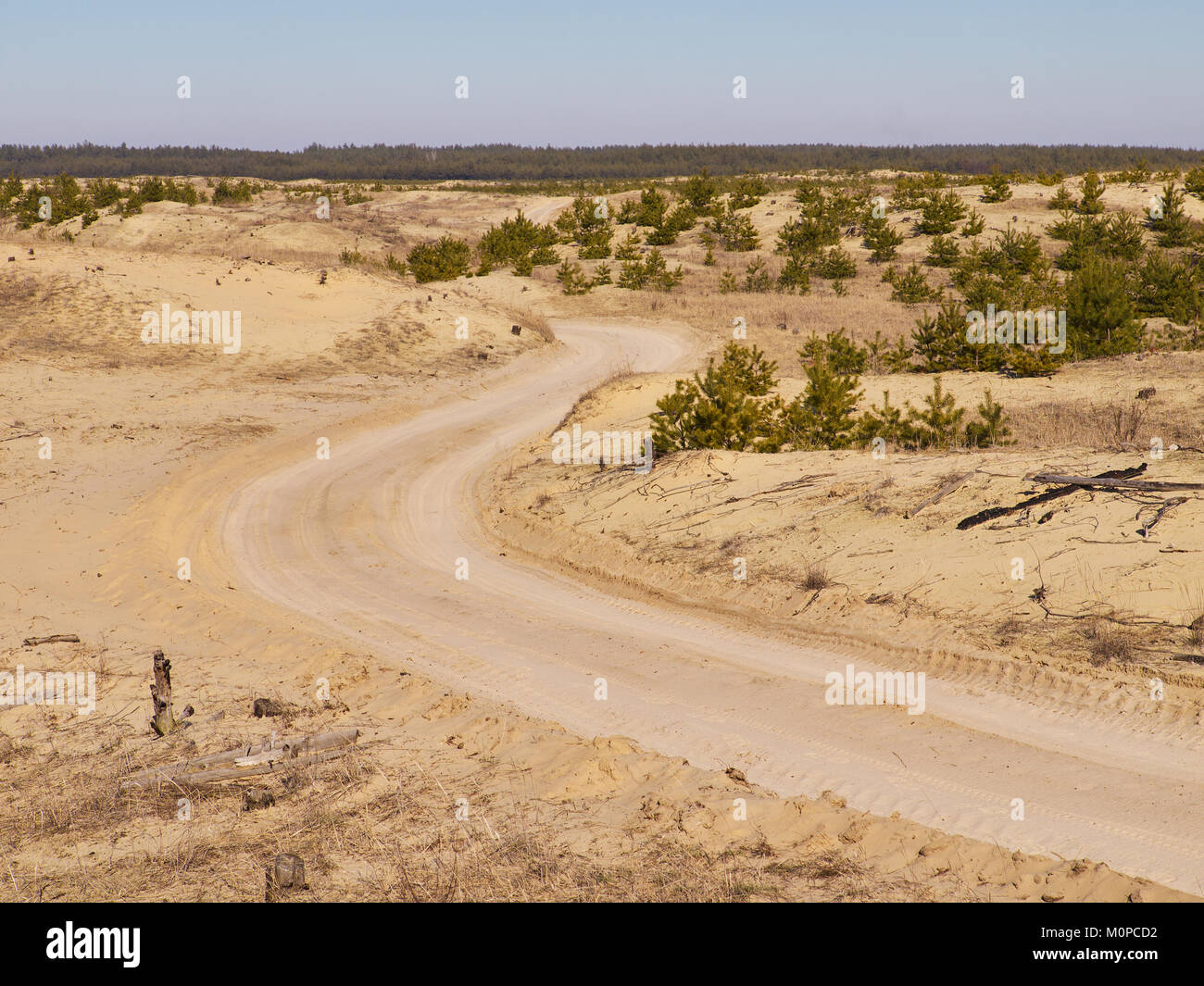 Dirt road between sand hills with remains of small spruces with forest on the background - Stock Image