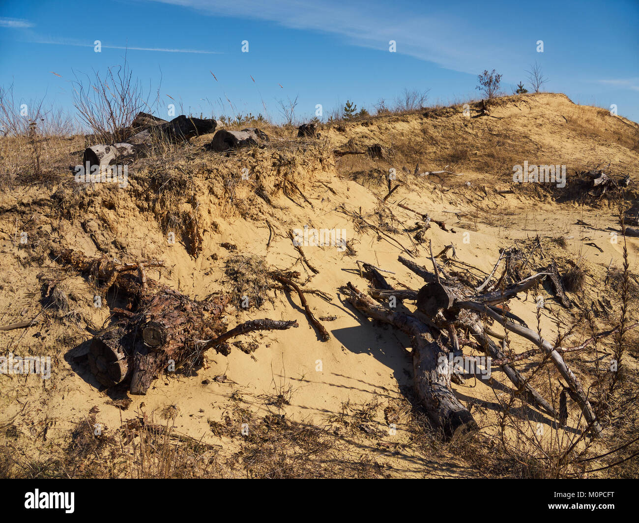 Dry grass and remains of spruces on the sand landslip under the blue sky - Stock Image