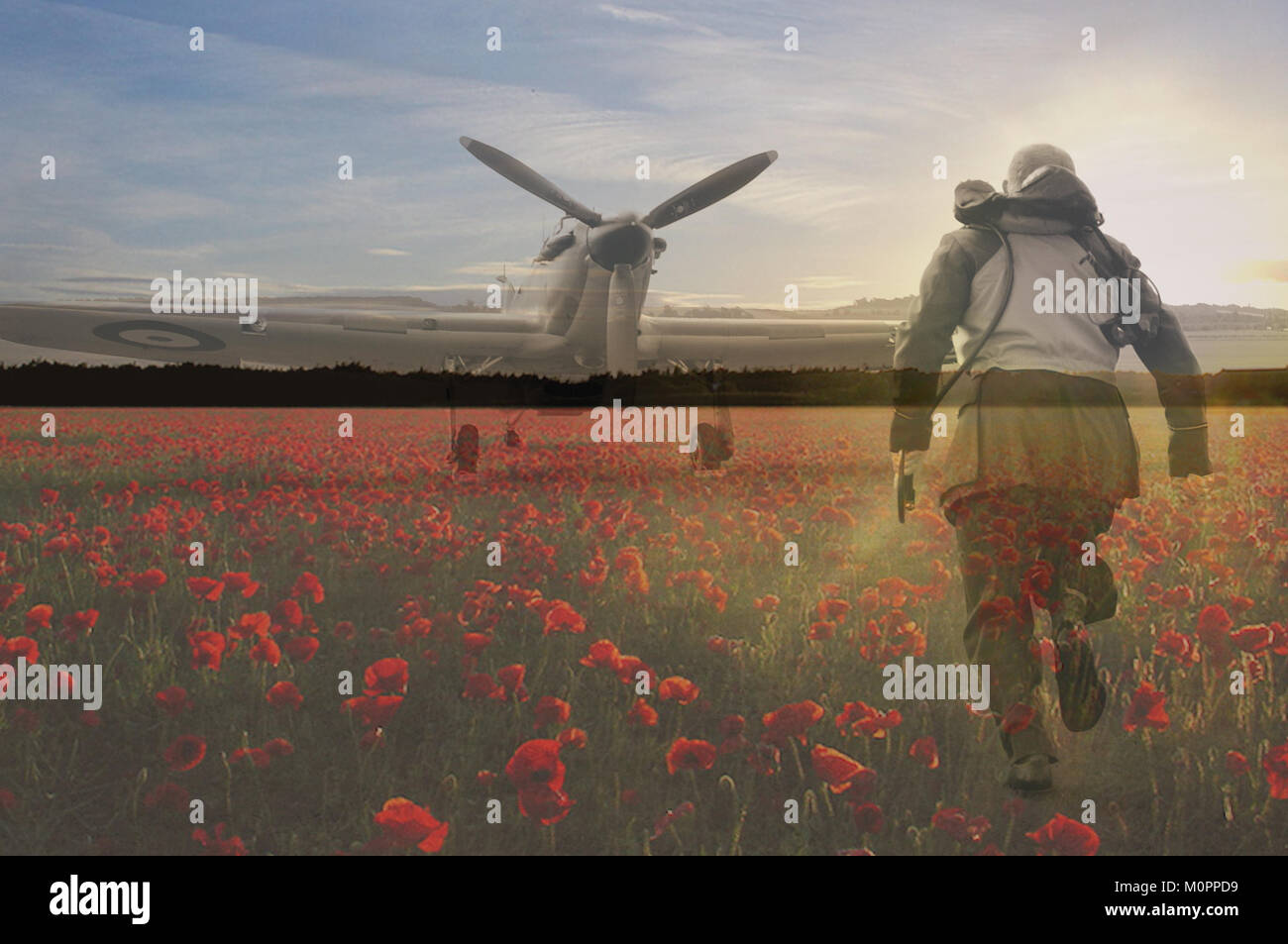 Remembrance Poppy Field Stock Photos & Remembrance Poppy ...
