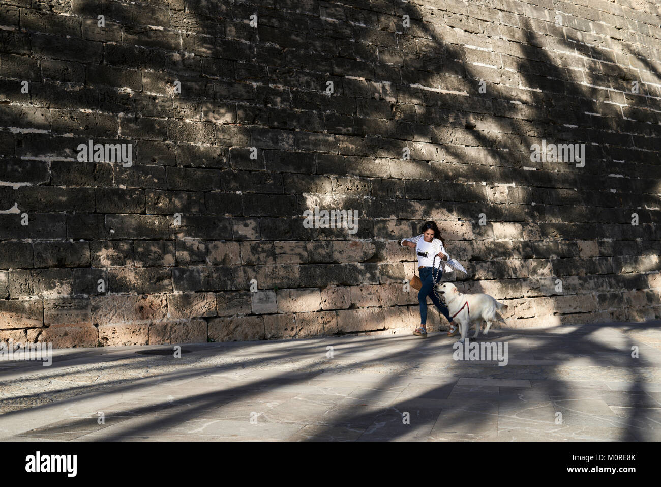 Pretty trendy girl and Golden dog running together under palms shadows in summer. - Stock Image
