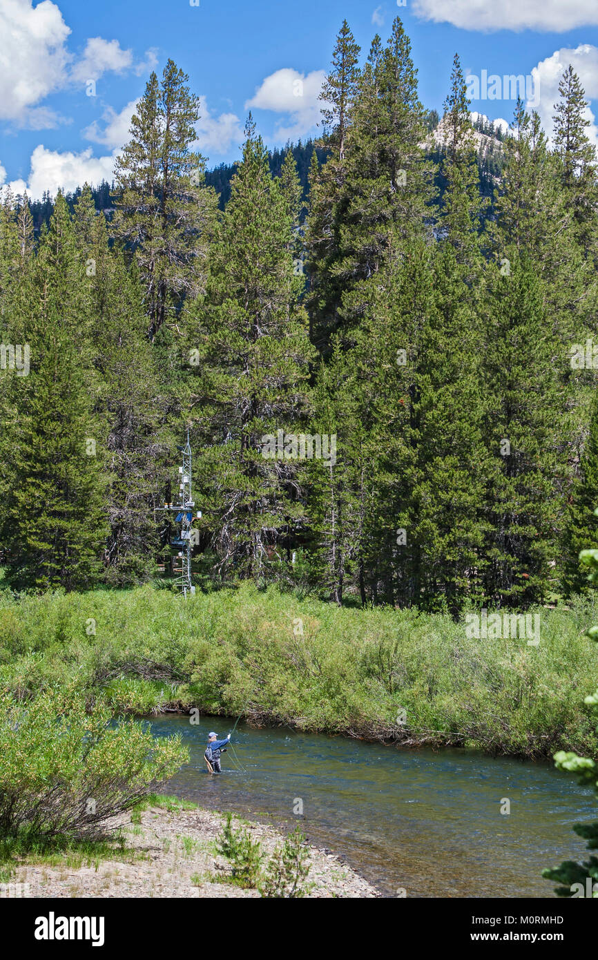 Fly fishing in the Middle Fork of the San Joaquin River, Devils Postpile National Monument, Inyo National Forest, - Stock Image