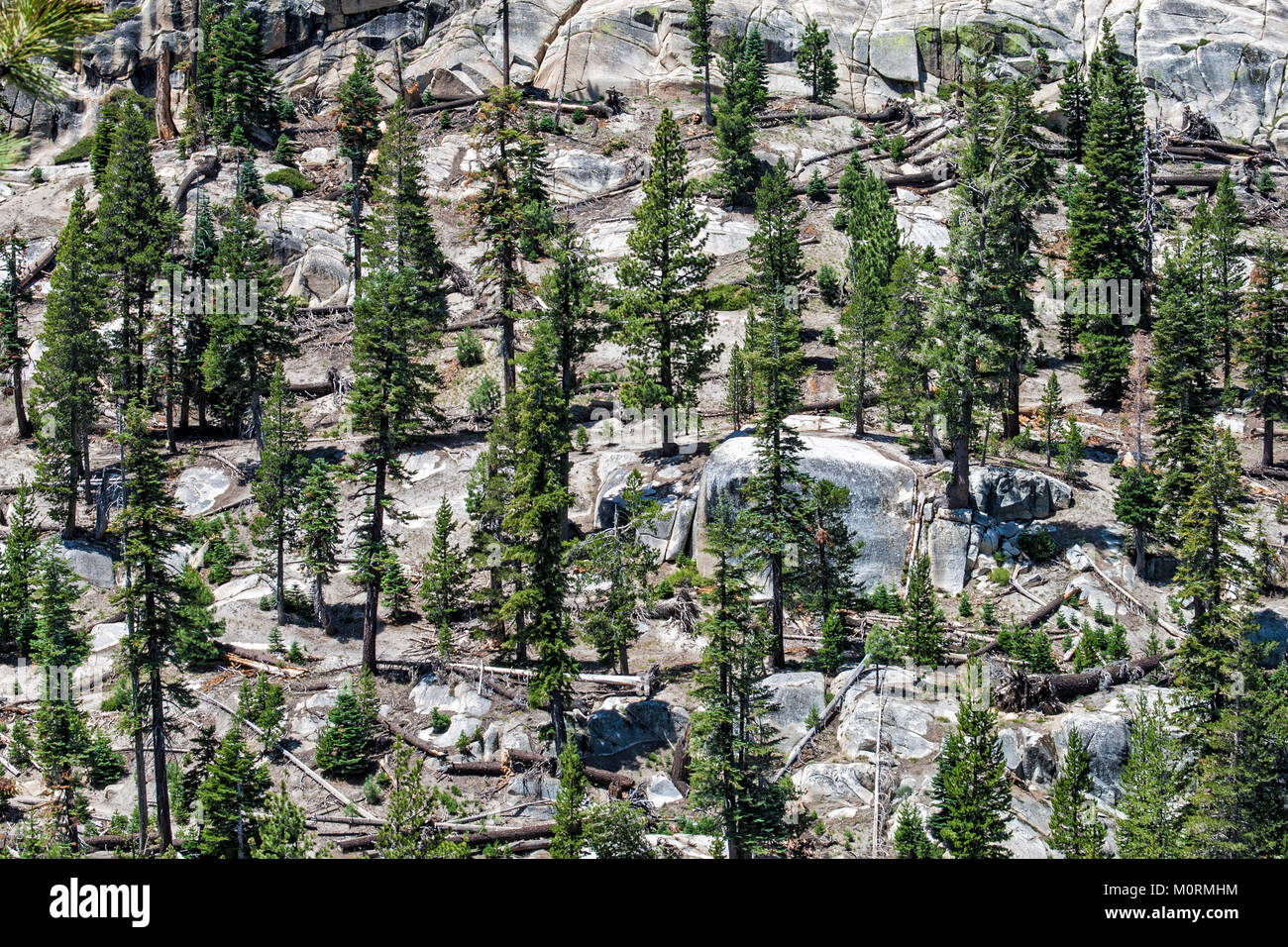 Rocks and Evergreens at Devils Postpile National Monument, Inyo National Forest, Madera County, California, USA - Stock Image