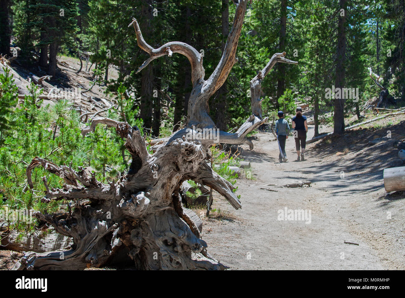 Hiking trail in Devils Postpile National Monument, Inyo National Forest, Madera County, California, USA - Stock Image