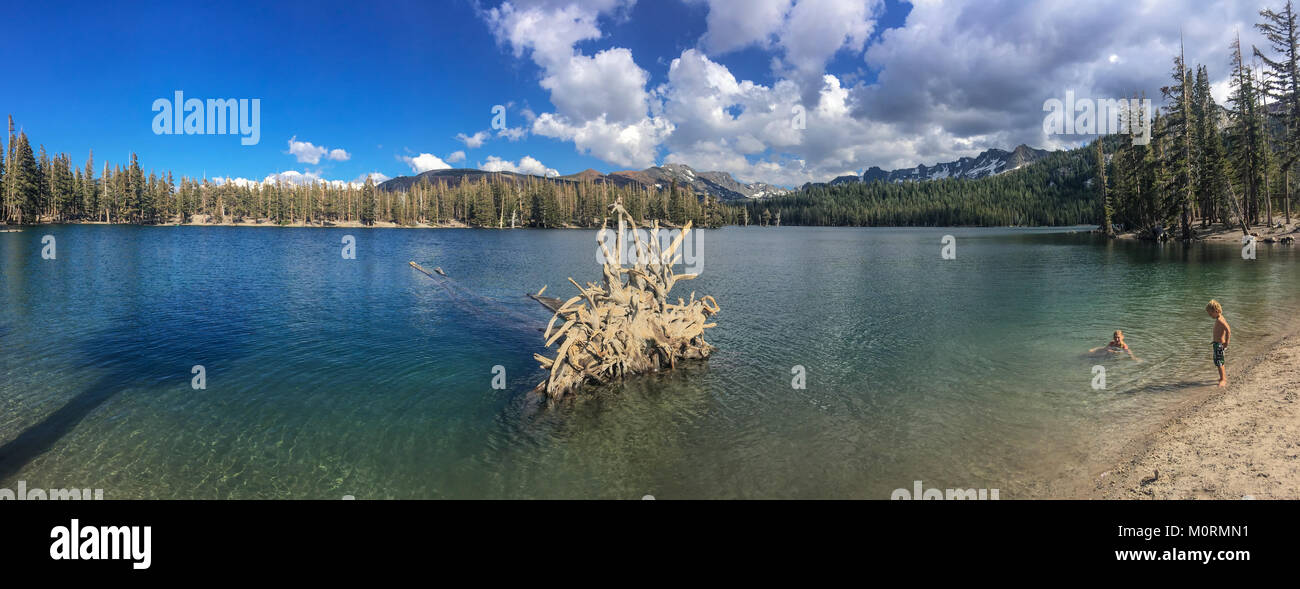 Dead trees around Horseshoe Lake. Higher than normal concentrations of CO2 are responsible for killing approx. 120 - Stock Image