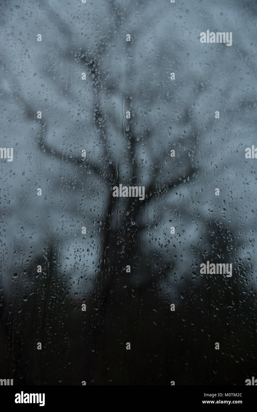 Rain drops obscure view of a tree - Stock Image