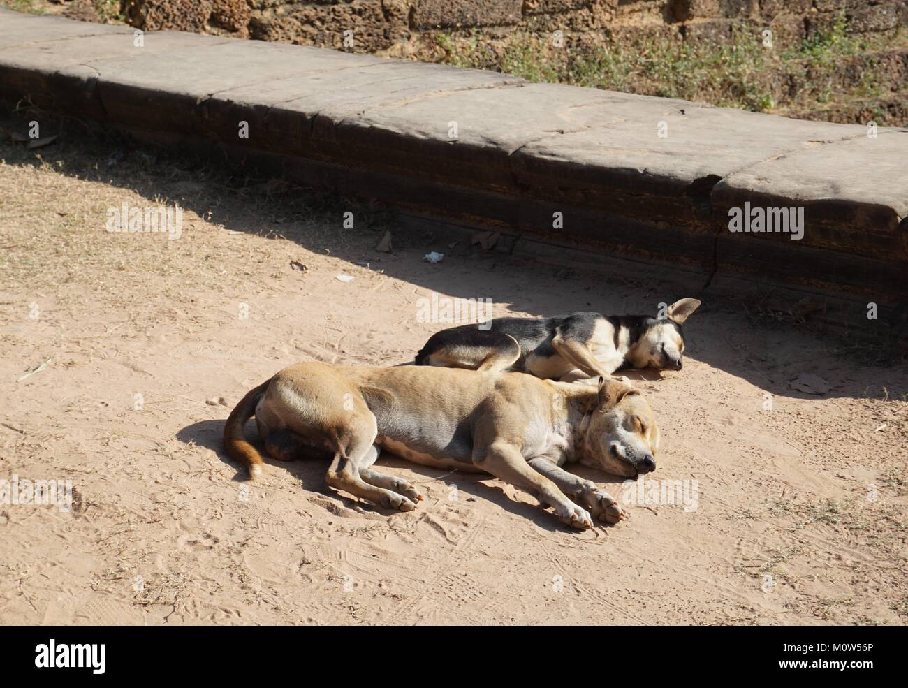 Two dogs in sharp focus relaxing in the warm cambodian sun - Stock Image