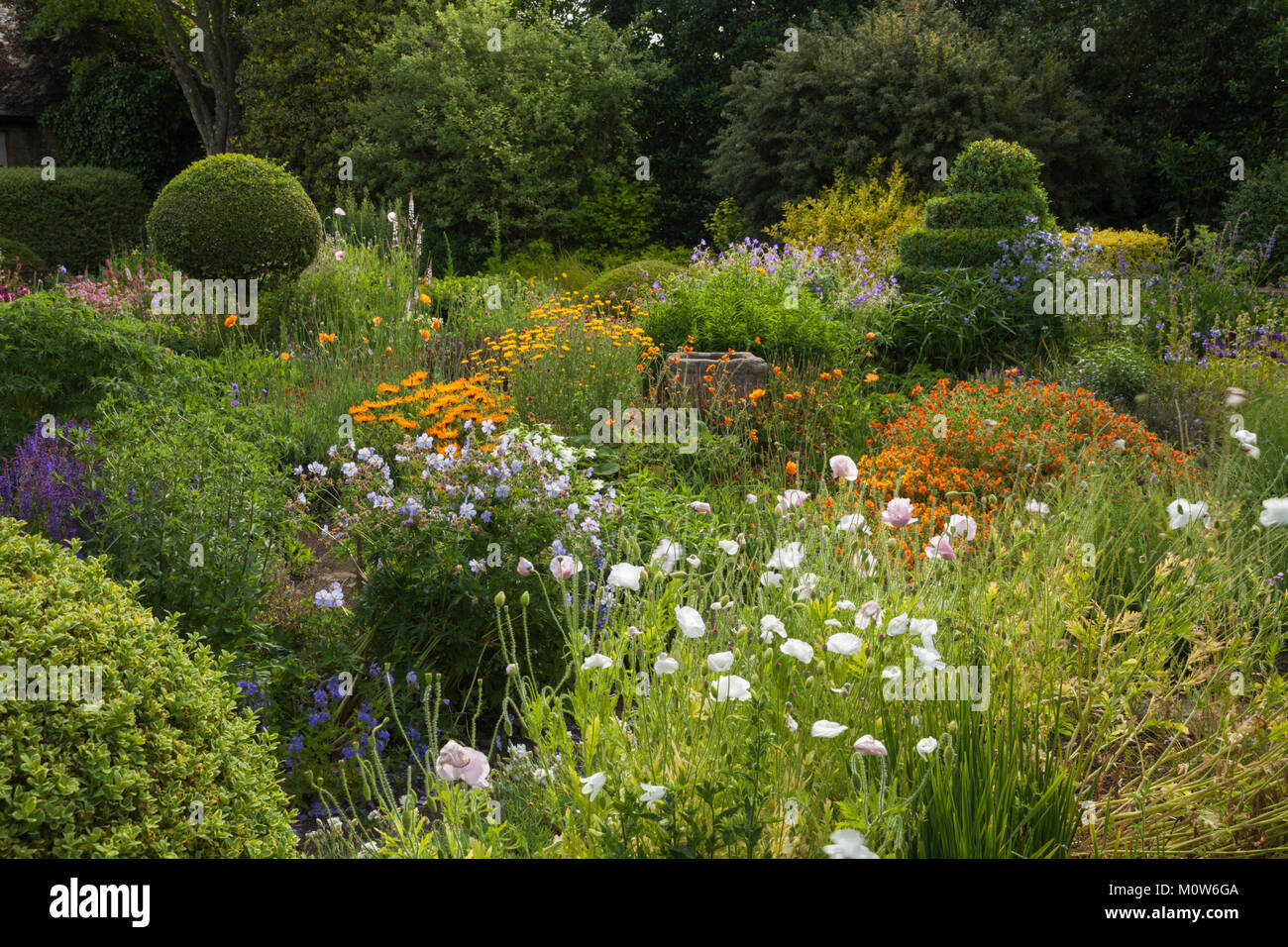 Colourful herbaceous flowers grow informally among topiary spheres and spirals in the flower garden of Herterton - Stock Image