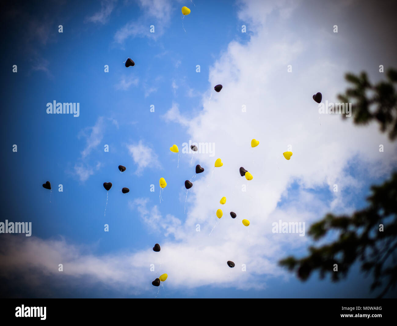 The balloons in the sky are black and yellow and the tree - Stock Image