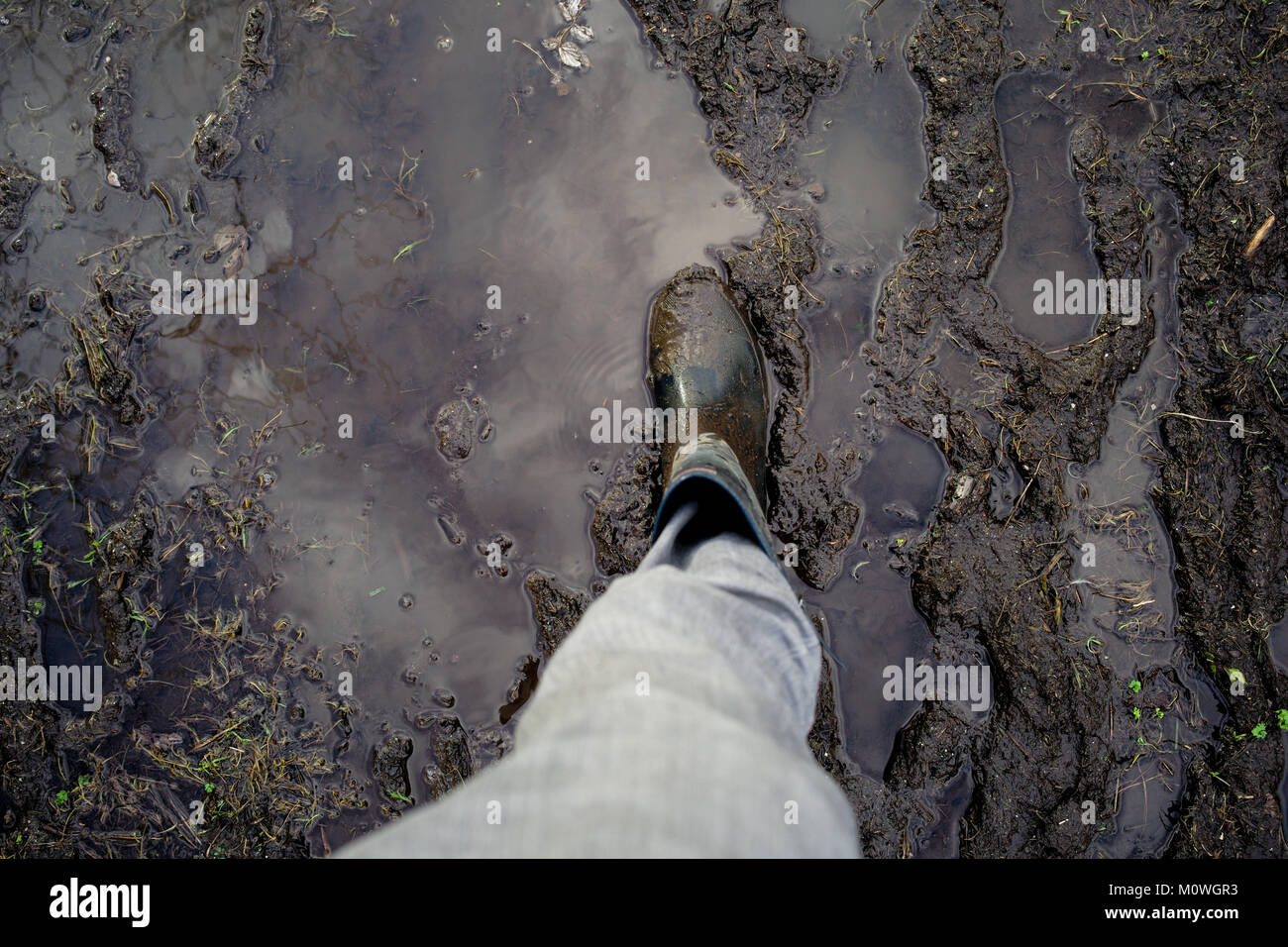 A welly boot on a muddy waterlogged path. With sky reflected in water puddle. Stock Photo