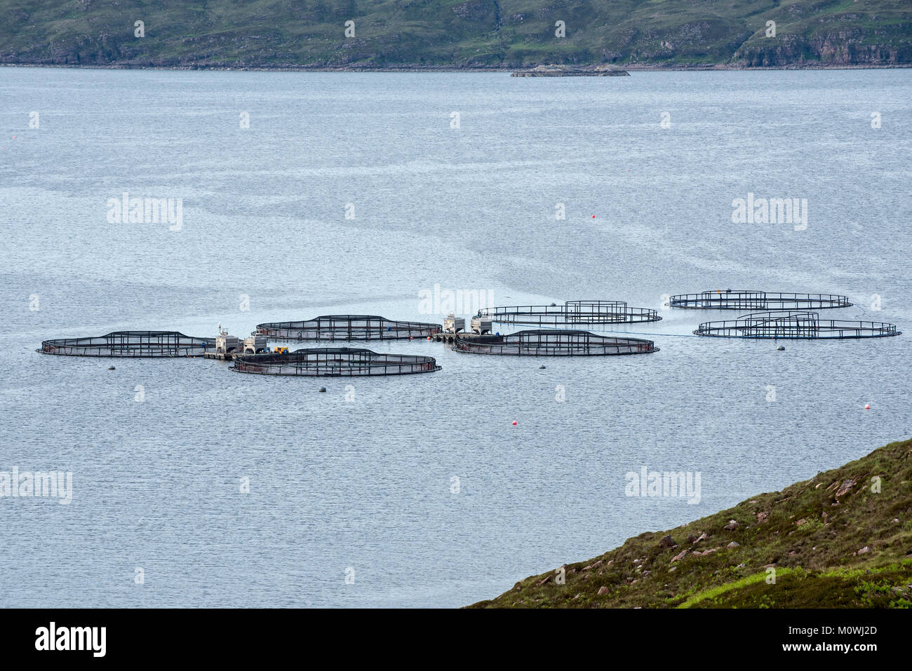 Floating circular pens supporting large net bags in loch at salmon fish farm in the Scottish Highlands, Scotland, - Stock Image