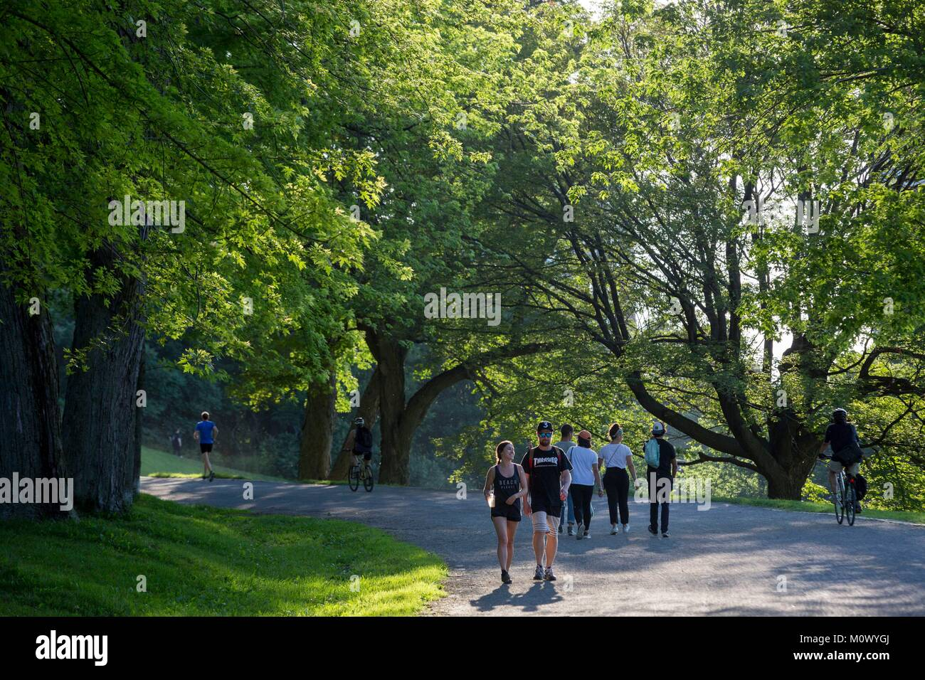 Canada,Quebec province,Montreal,Mount Royal Park,Summer Walkers - Stock Image