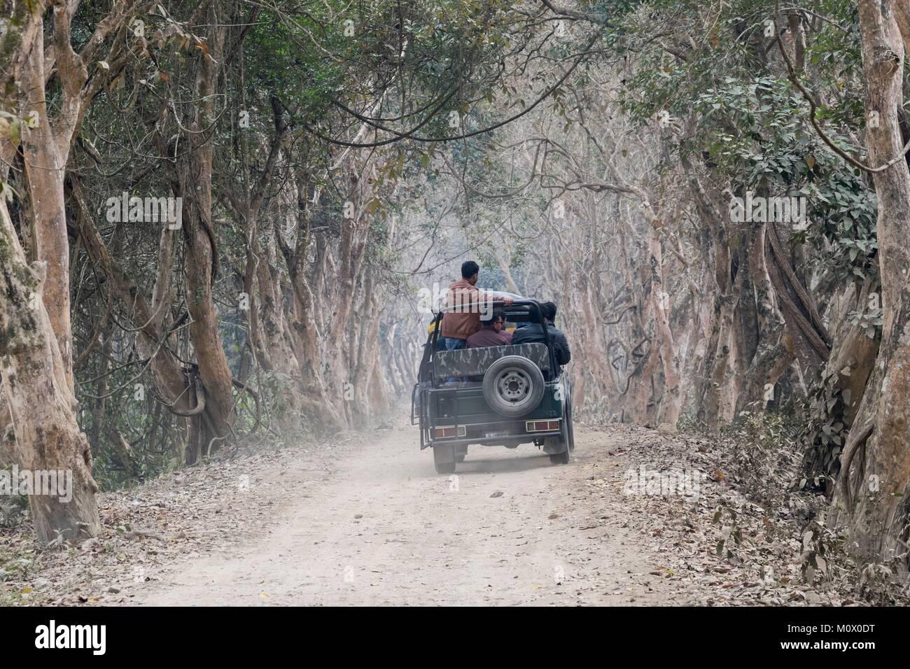 India,State of Assam,Kaziranga National Park,trail in a tree lane,safari in the park - Stock Image