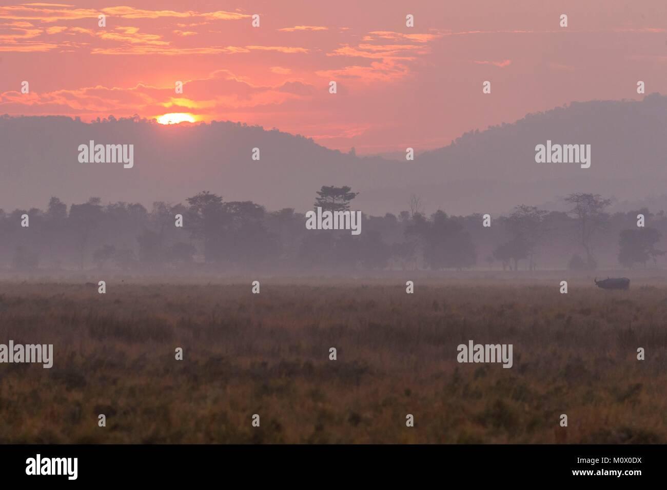 India,State of Assam,Kaziranga National Park,marshes - Stock Image