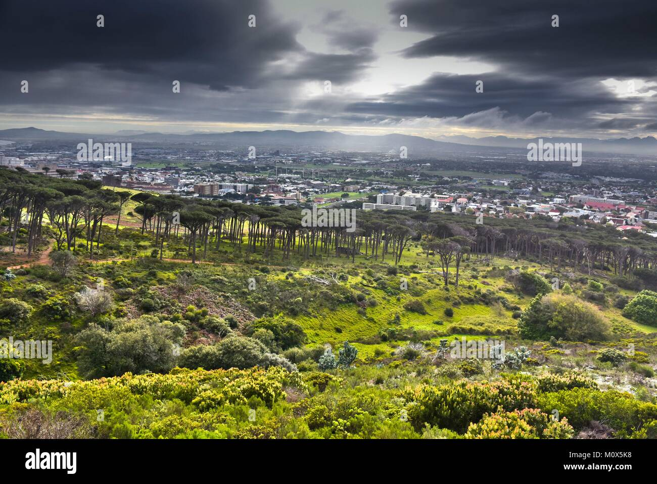 South Africa,Cape Town,forest near Rhodes Memorial - Stock Image