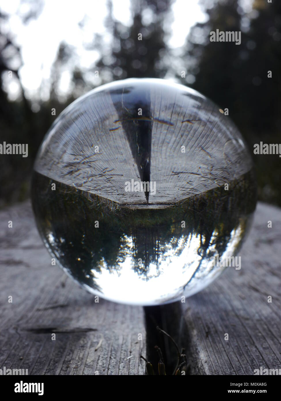 bowl on wood which is mirror inverted  - Stock Image