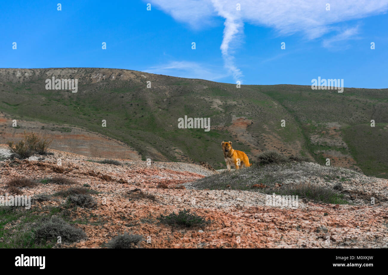 Shepherd dog in the mountains - Stock Image