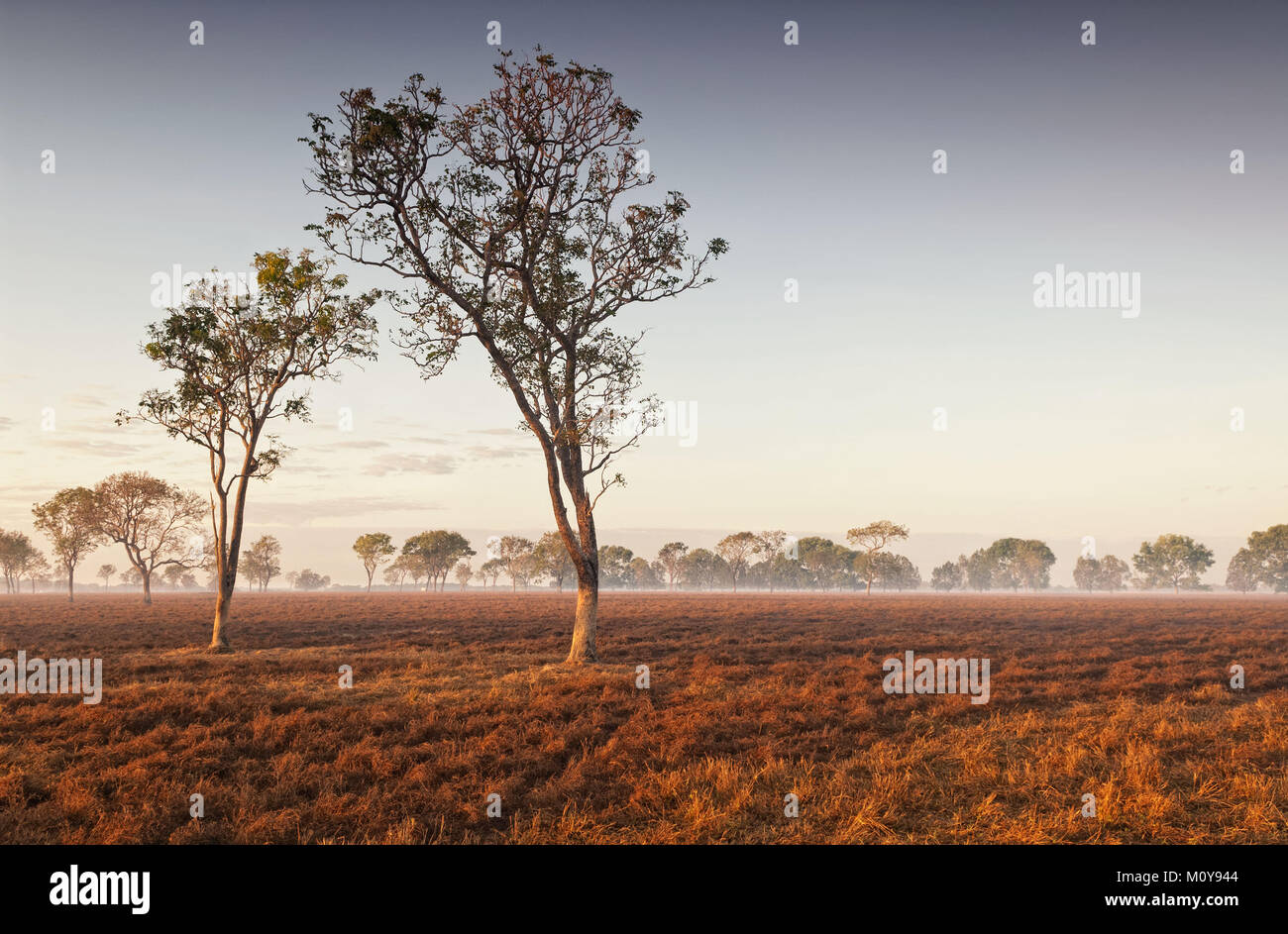 Dawn mist amongst trees in the Australian Outback (Darwin, Northern Territory) - Stock Image
