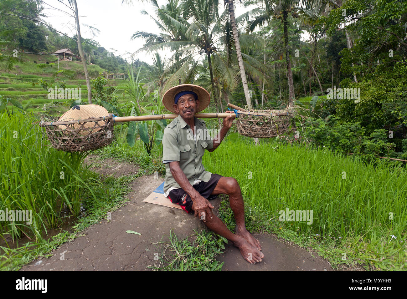 Rice grower at the rice terraces of Tegalalang,Ubud,Bali,Indonesia - Stock Image