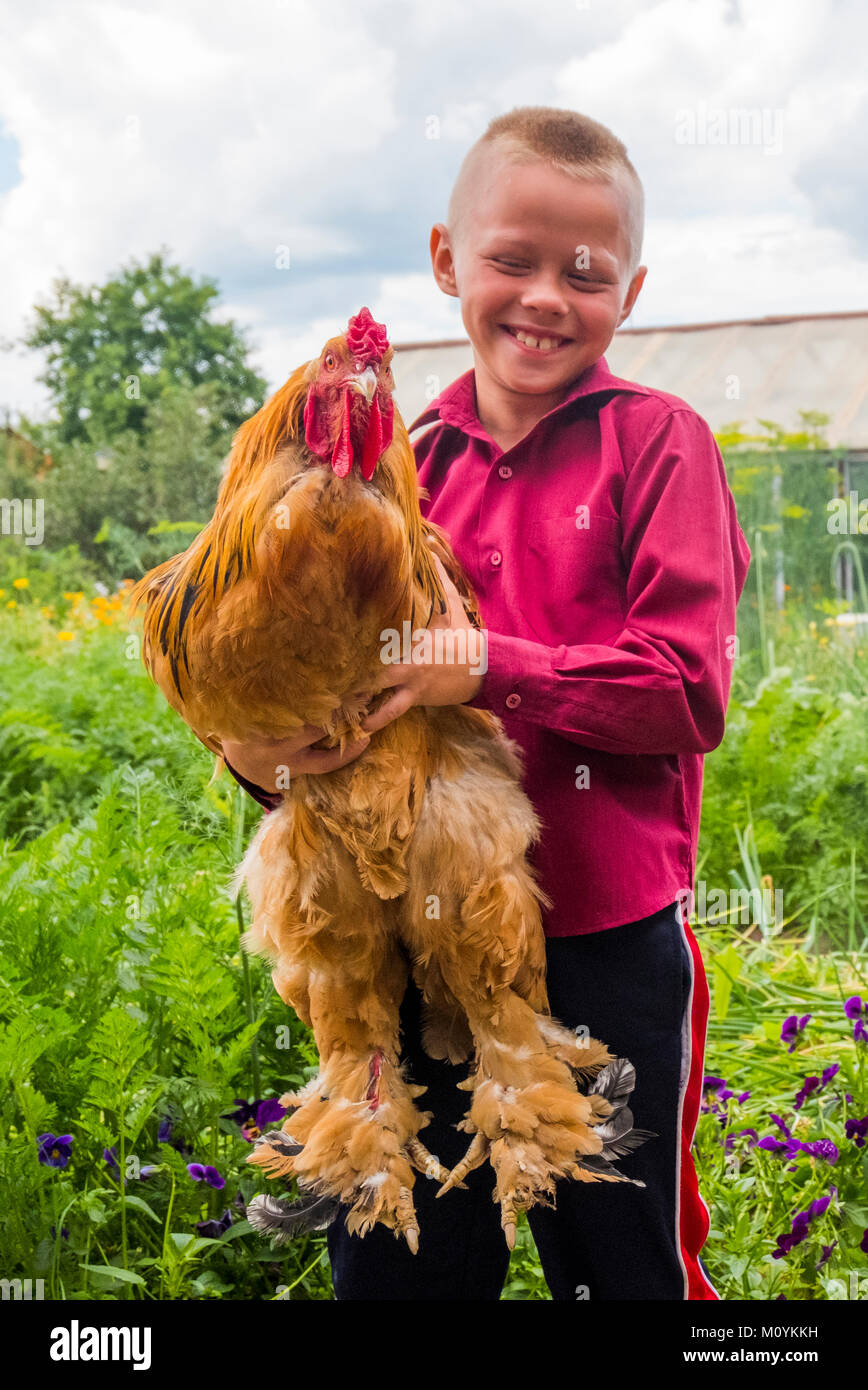 Caucasian boy holding rooster on farm Stock Photo