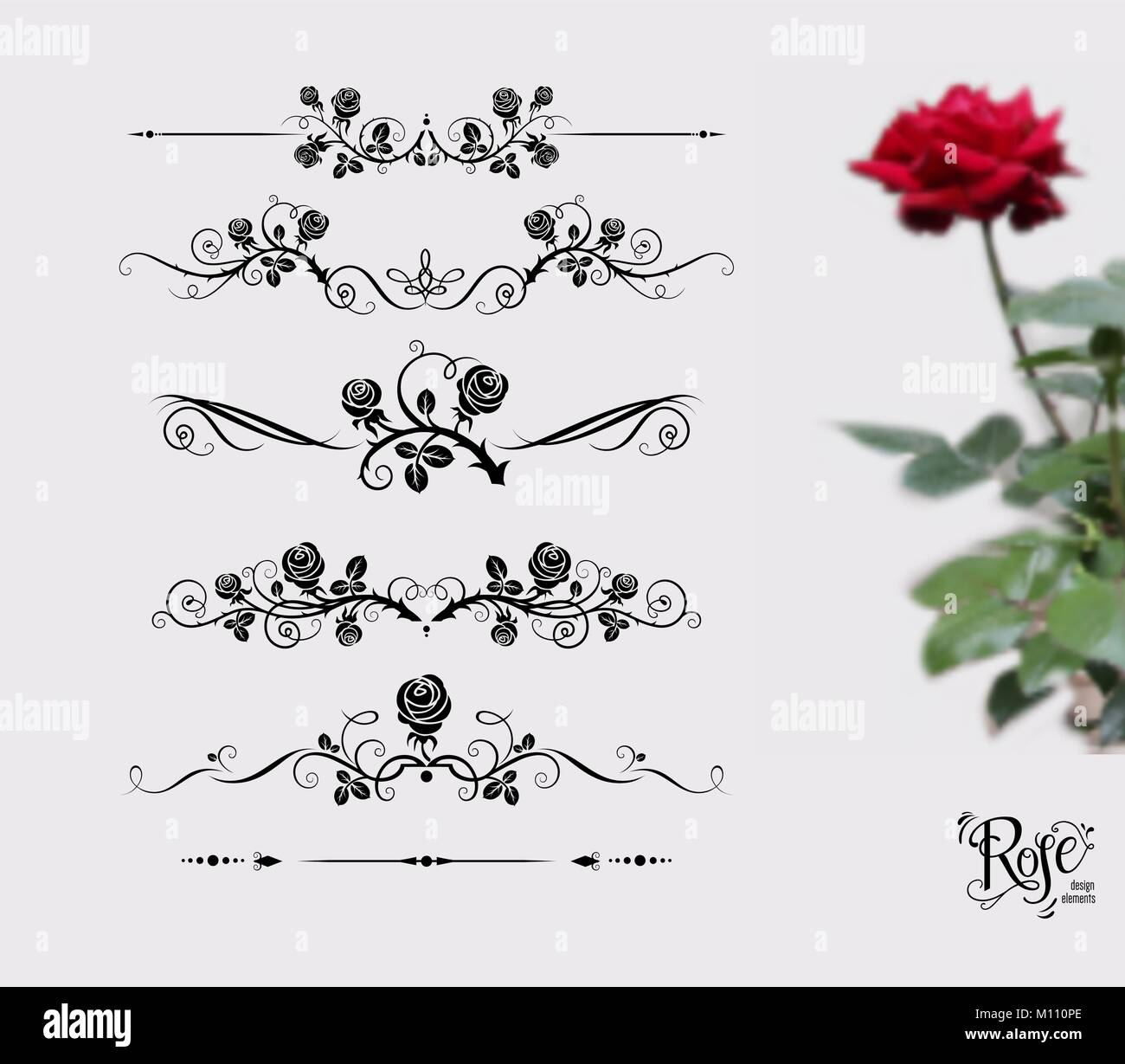 The Rose And Thorn Stock Vector Images Alamy Flower Line Diagram Simple Drawing Of Bud Tattoo Black Set