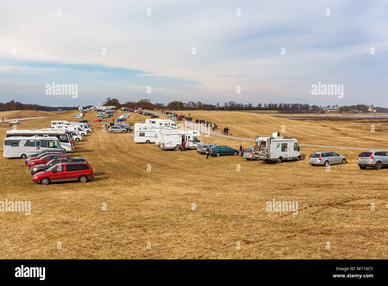 Car parking on a field for birdwatchers at Lake Hornborgation in Sweden - Stock Image