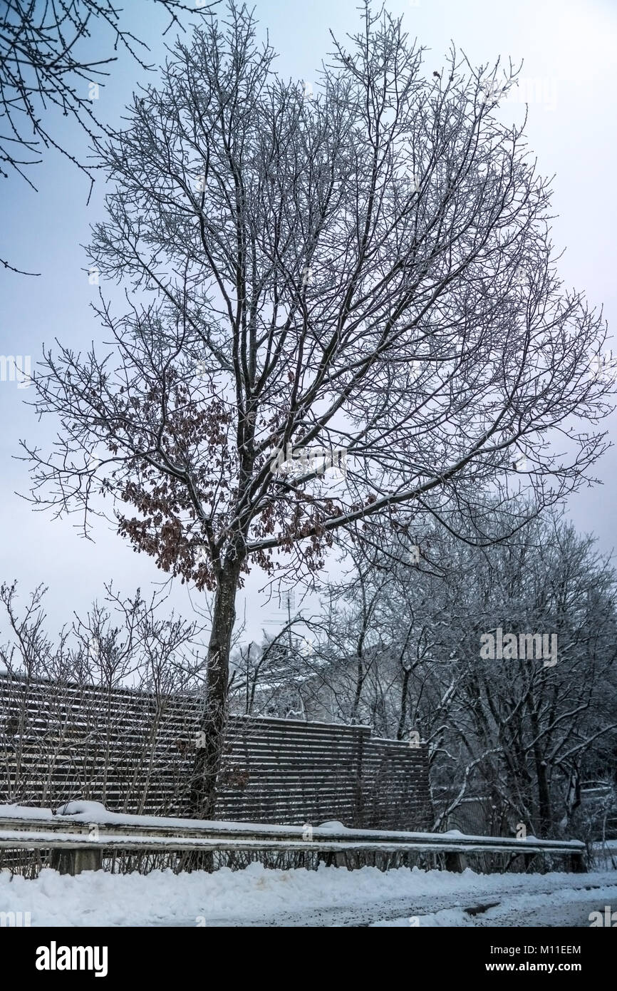 A nice tree in a residential area in a swedish city during the cold season. Snow over nearby houses and frozen nature - Stock Image
