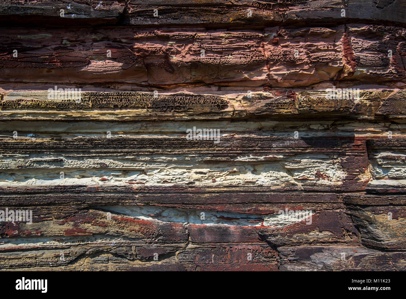 Close up of Devonian Old Red Sandstone in sea cliff at Duncansby Head near John o' Groats, Caithness, Highland, - Stock Image