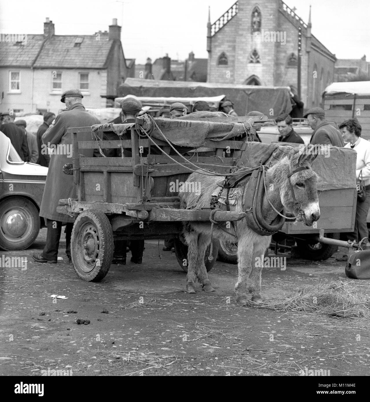 Donkey and cart at Galway Market in Ireland - Stock Image