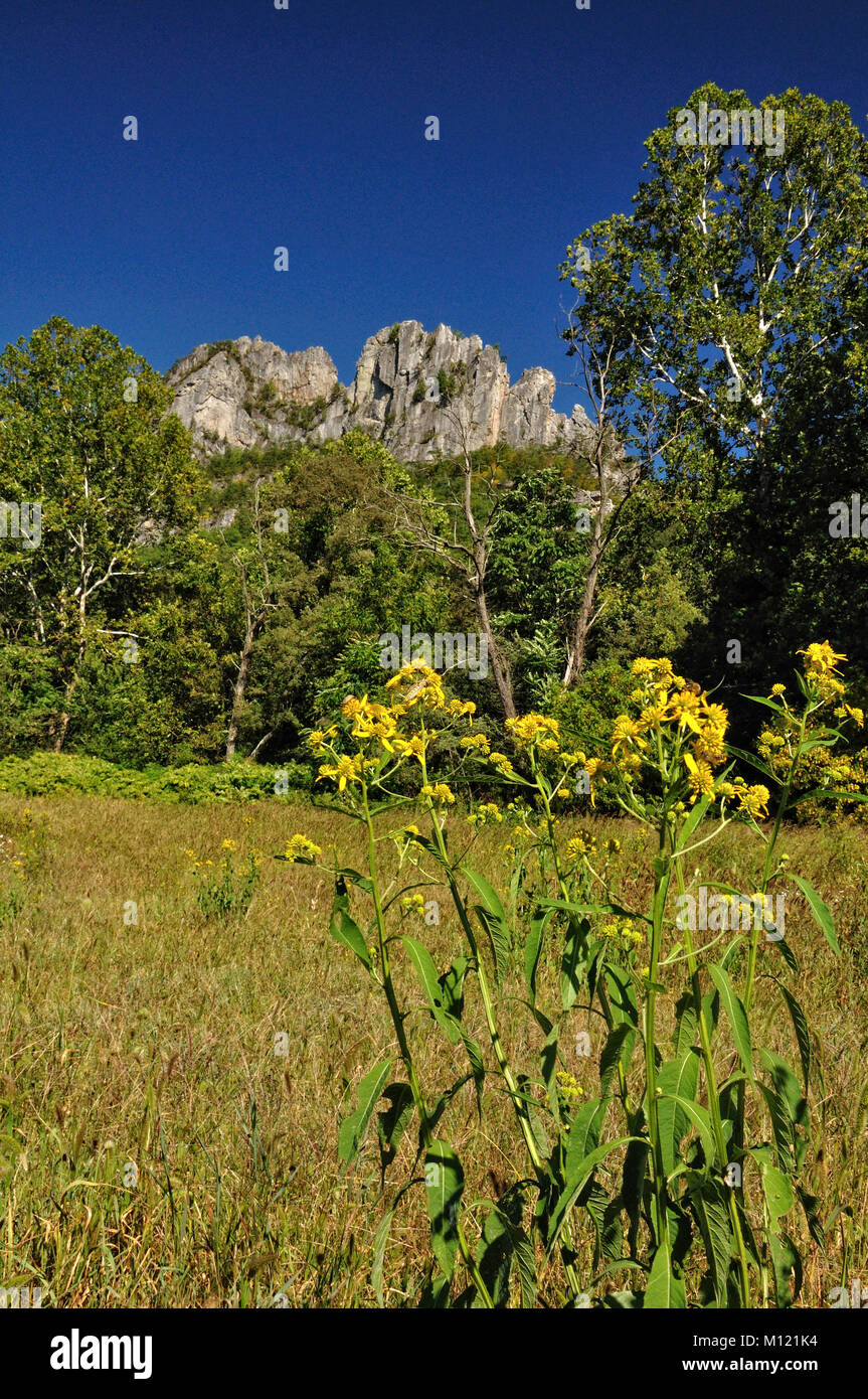 Seneca Rocks West Virginia Stock Photos Amp Seneca Rocks