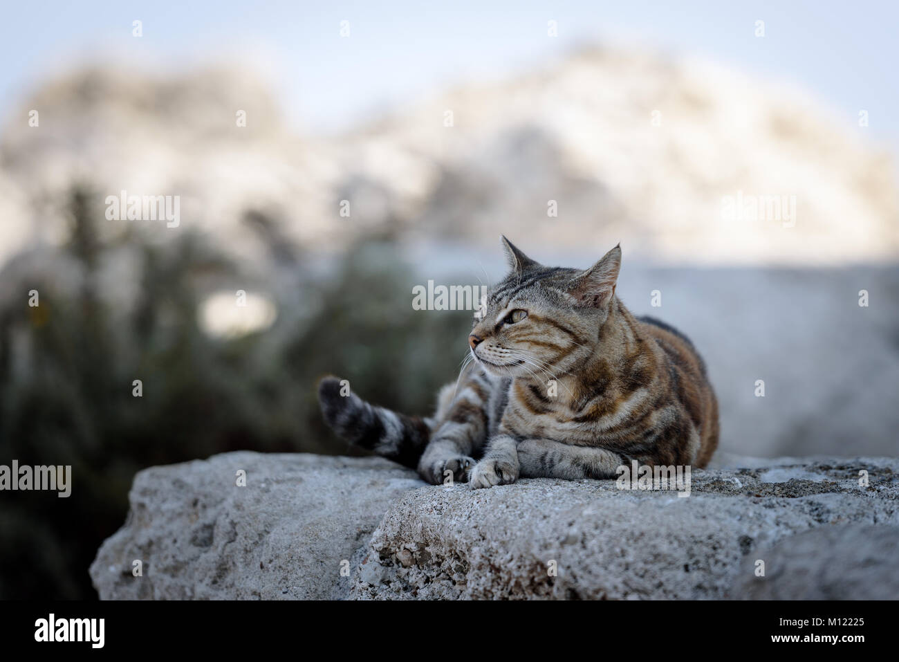 Greek cat is laying on a stone on Rhodes island, Greece - Stock Image