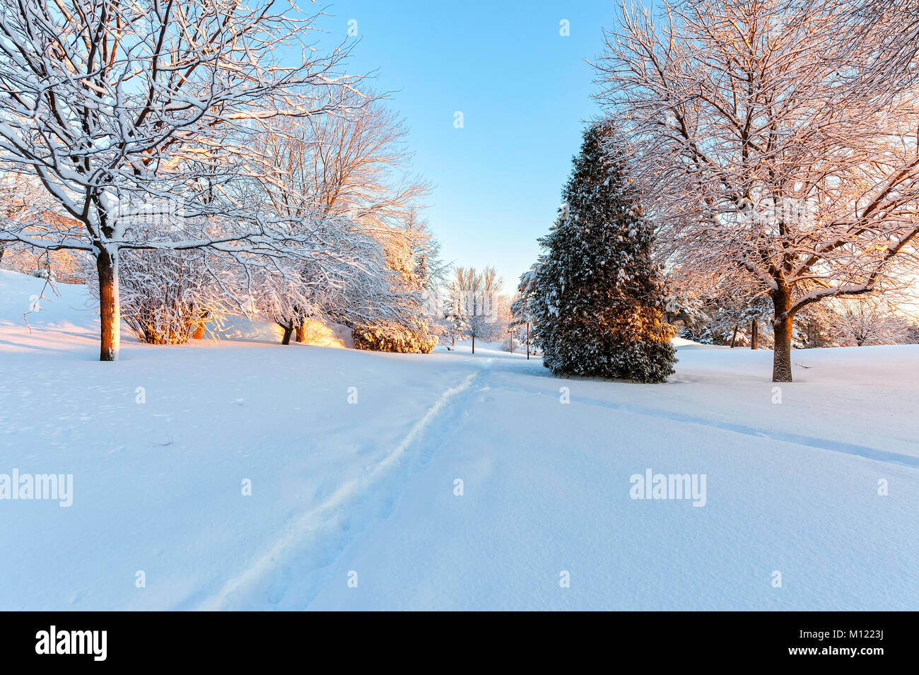 This picture was taken at dawn in Bell park,Sudbury, Ontaio, on Christmas morning after a fresh snowfall - Stock Image