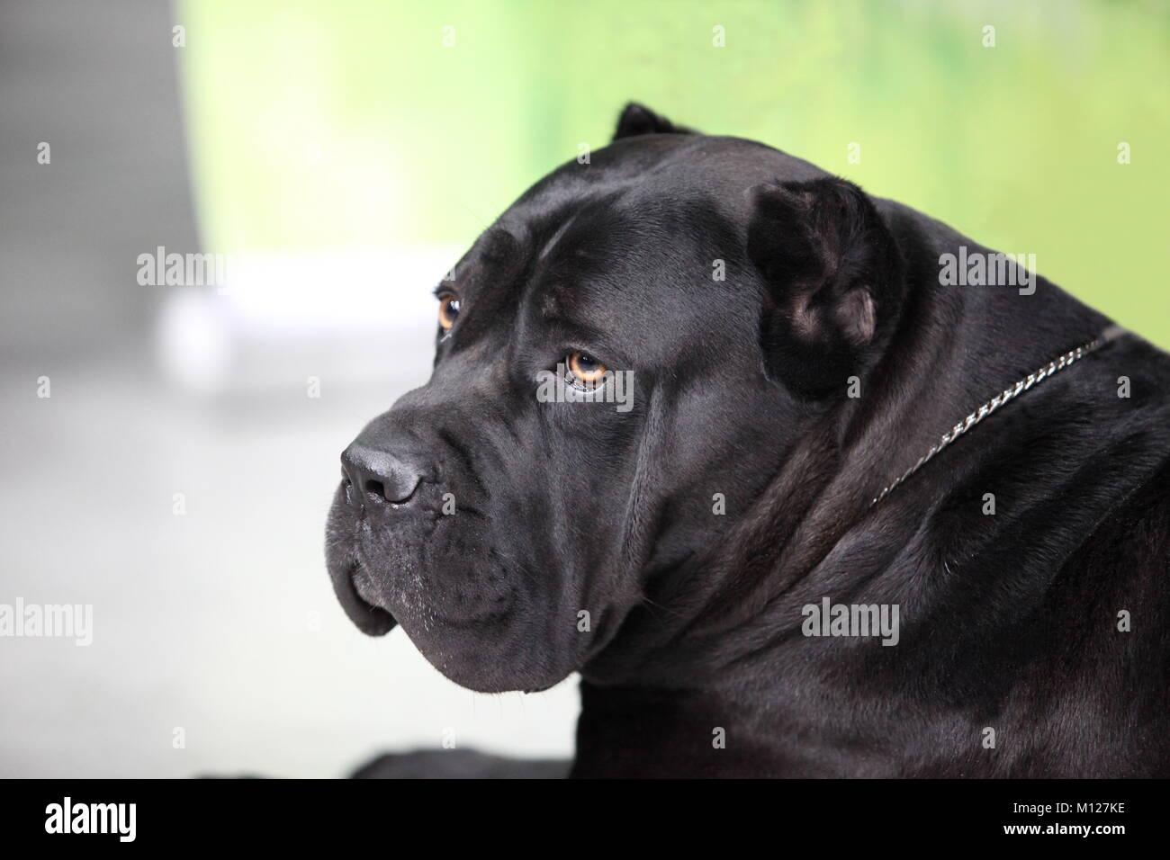 Watchdog Stock Photos & Watchdog Stock Images - Alamy