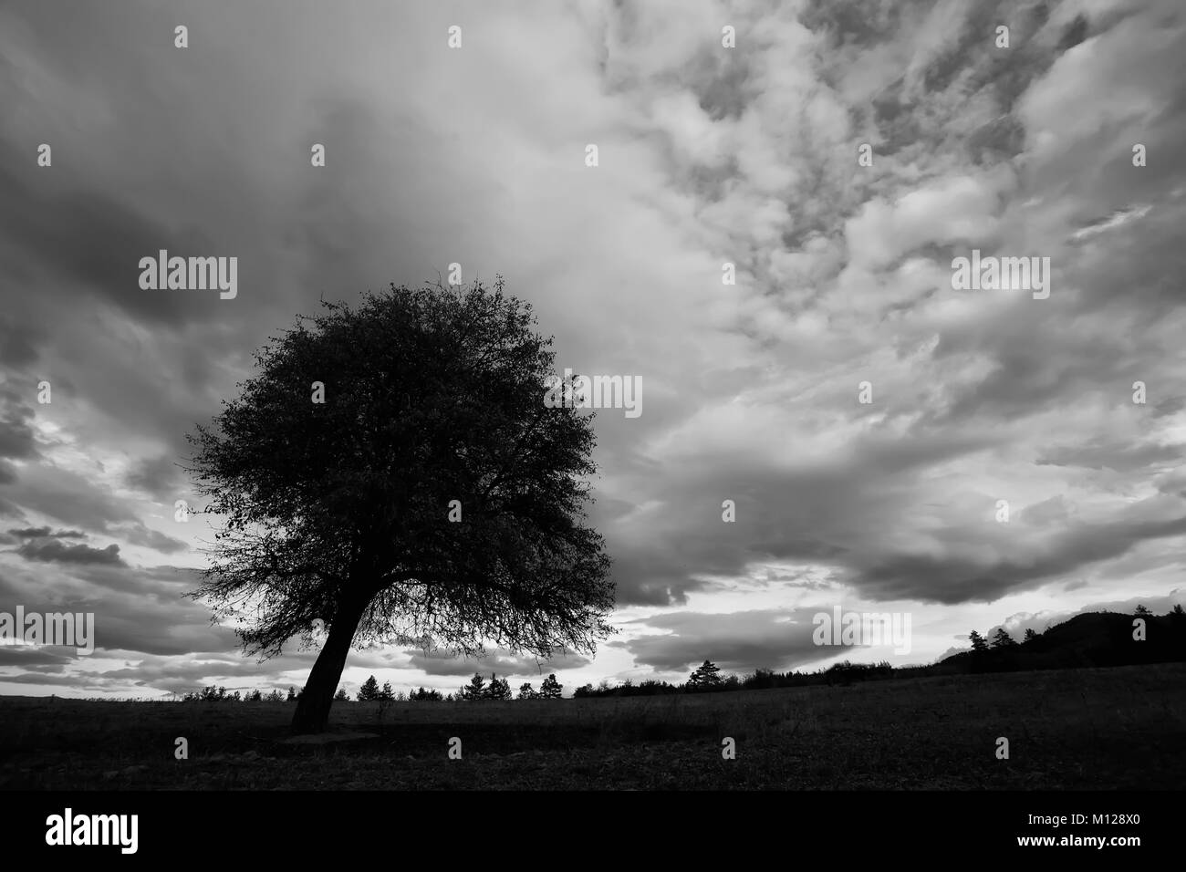 high contrasted black and white cloudscape with tree silhouette in foreground - Stock Image