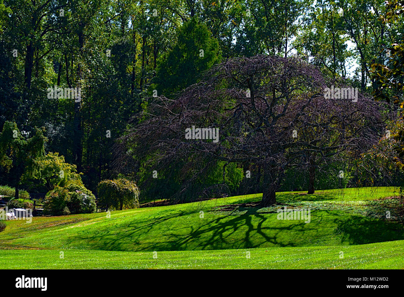 Lush green Tree Landscape - Stock Image