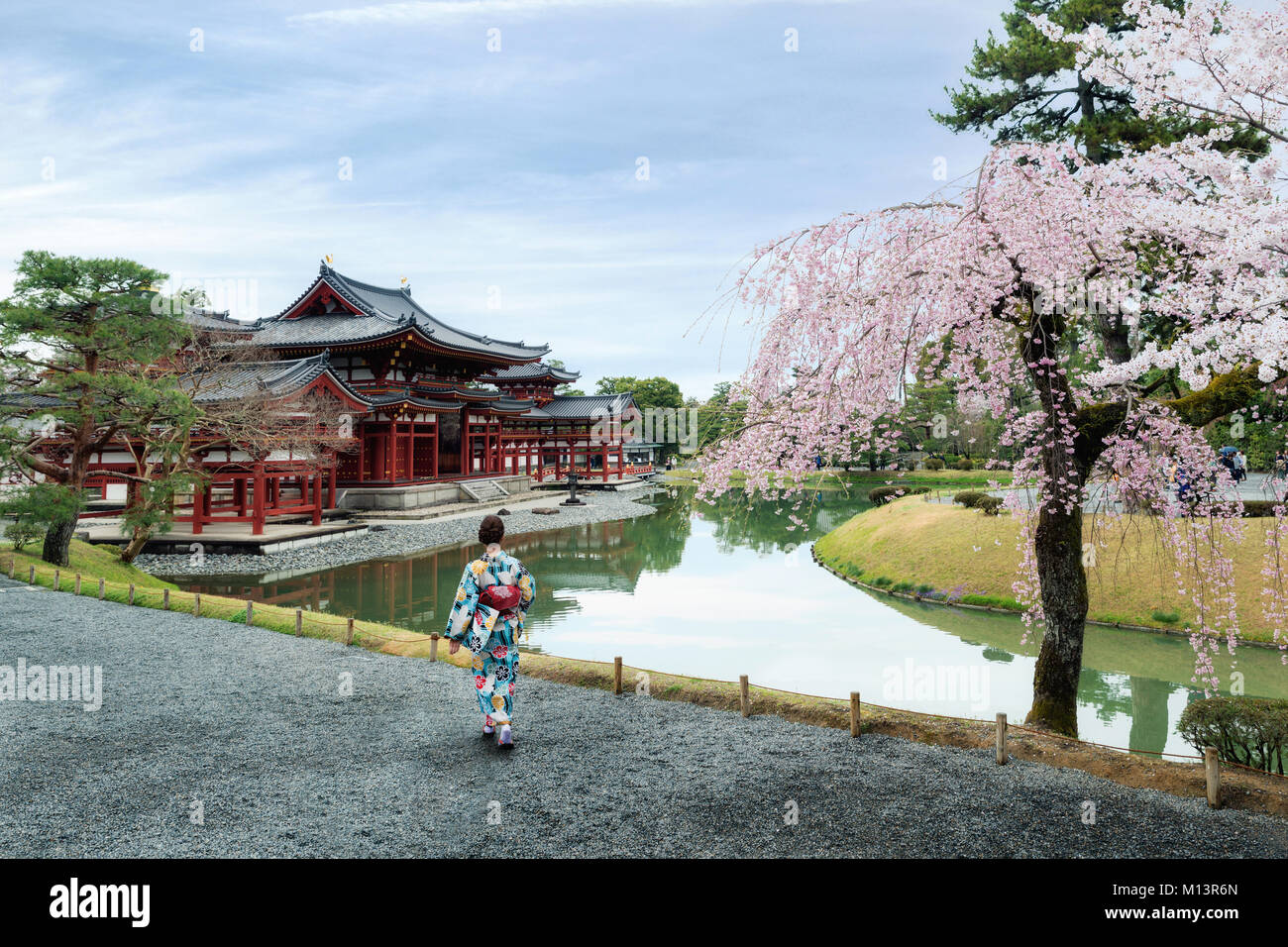 Asian women wearing traditional japanese kimono in Byodo-in Temple in Uji, Kyoto, Japan during spring. Cherry blossom - Stock Image