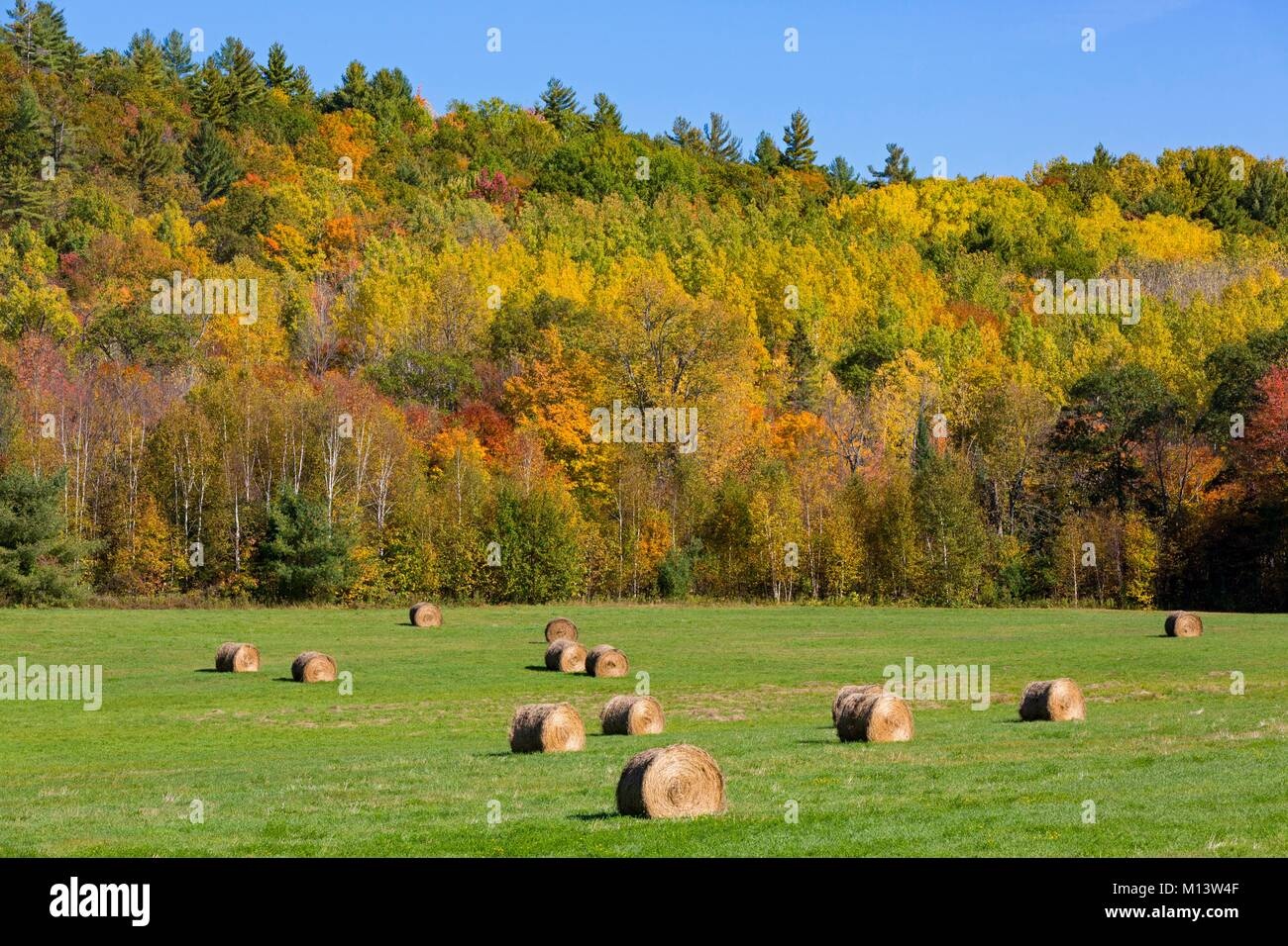 Canada, Province of Quebec, Outaouais, Pontiac region, L'Isle-aux-Allumettes area, field and bales of straw - Stock Image