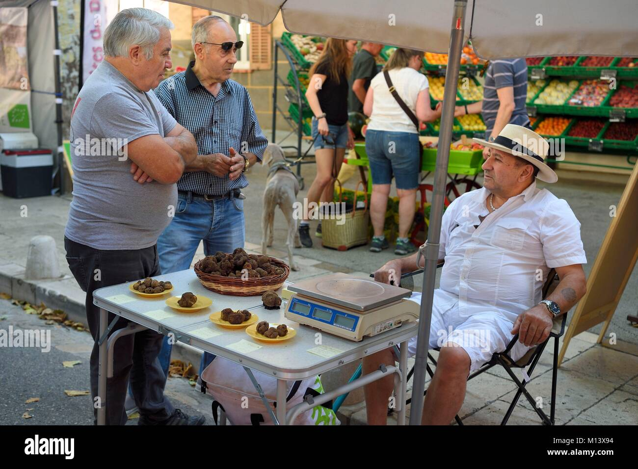 France, Var, Provence Verte, Cotignac, the market on the main square, summer truffle (Tuber aestivum) seller - Stock Image