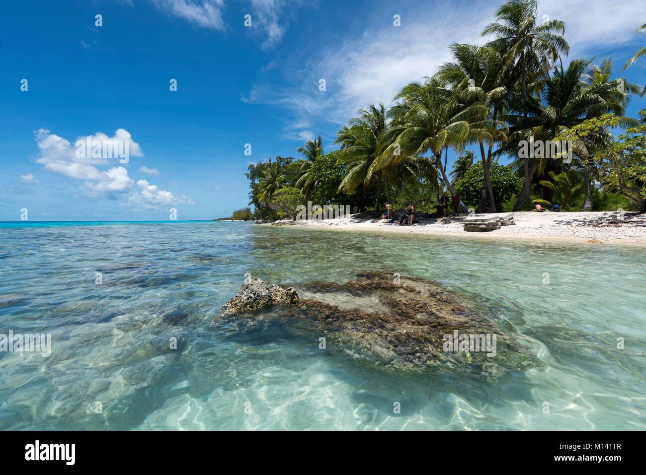 France, French Polynesia, Tuamotu Archipelago, Rangiroa Atoll, cruises aboard the Aranui 5 mixed cargo ship, potato - Stock Image